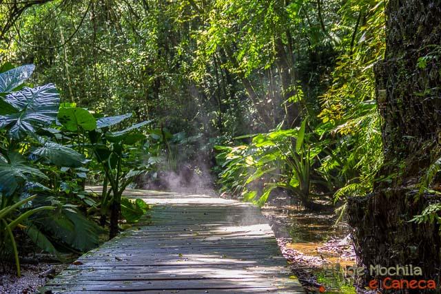 parques mais importantes de curitiba-Bosque Zaninelli