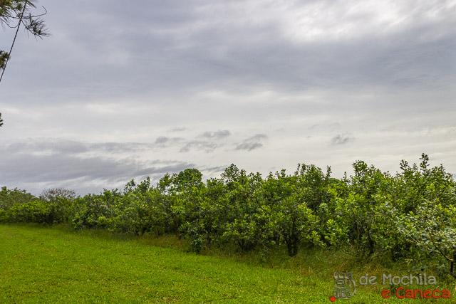 fábrica de erva-mate selecta terere-plantação