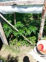 Plantação orgânica do Hostel :D