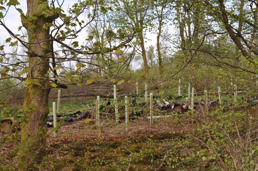 Woods behind Bellsmyre