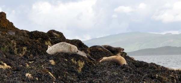 Salmon and seals 2