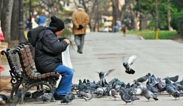 pigeon feeder.jpg 2