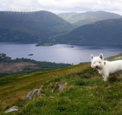 feathers dog at top of Bedn Lomond.jpg 2