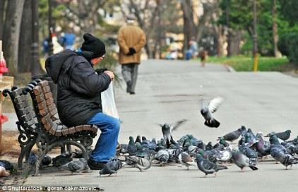 pigeon feeder
