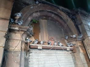 pigeons by Jim Crosthwaite under Dumbarton East Bridge