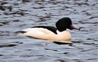 ducks 2.jpg 3