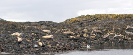 Salmon and seals