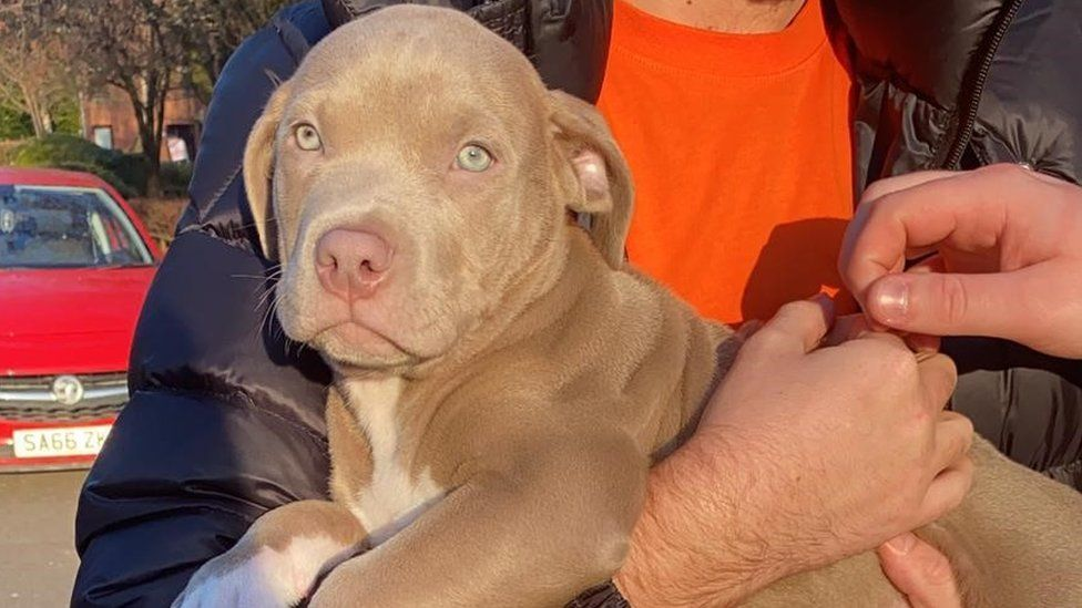 DOG ALERT: Puppy reunited with owners after armed raid