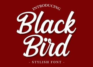 Black Bird Font