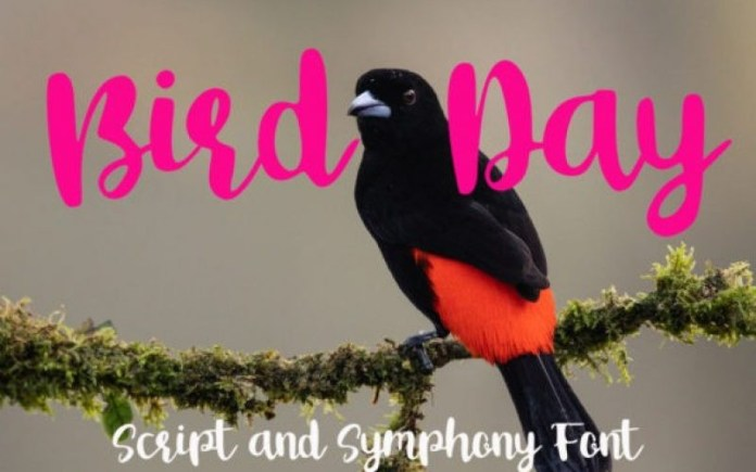 Bird Day Font