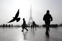 Parisian Morn by Cubz Cubbon