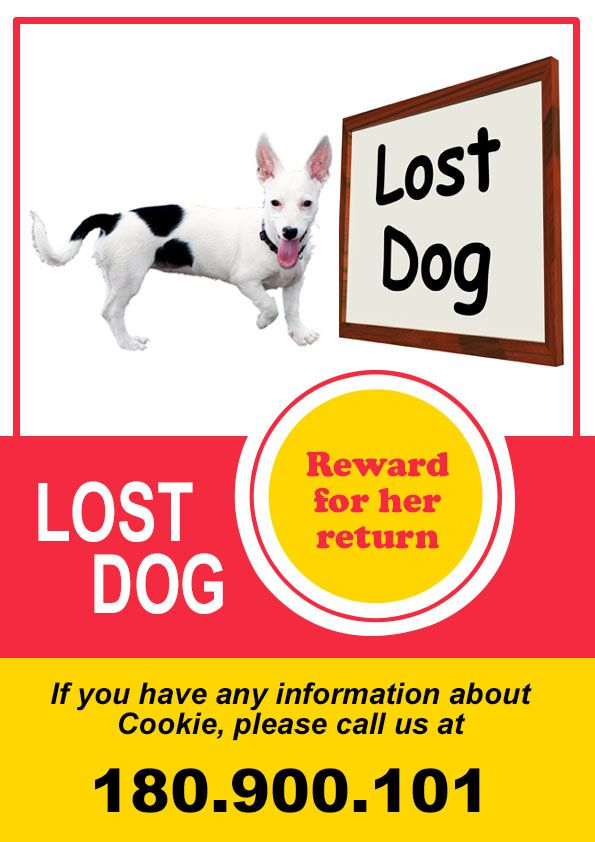 Lost Pet Flyer Template. Lost Pet Flyer. 20 Best Lost Dog Flyer