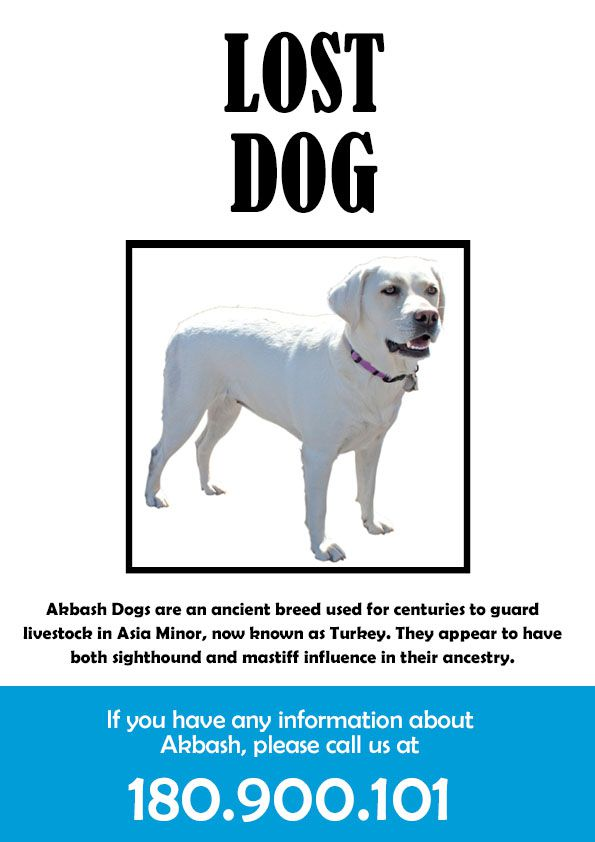 Lost Dog Template use these free images for your websites art – Missing Pet Template