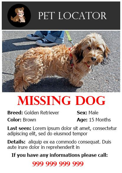 Doc Missing Dog Flyer Template  Create Flyer  More
