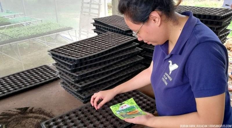 Duran Fam Bulacan seedlings