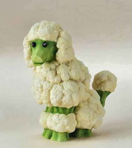 cabbage-poodle