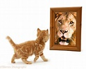 kitten_Lion_Purpose