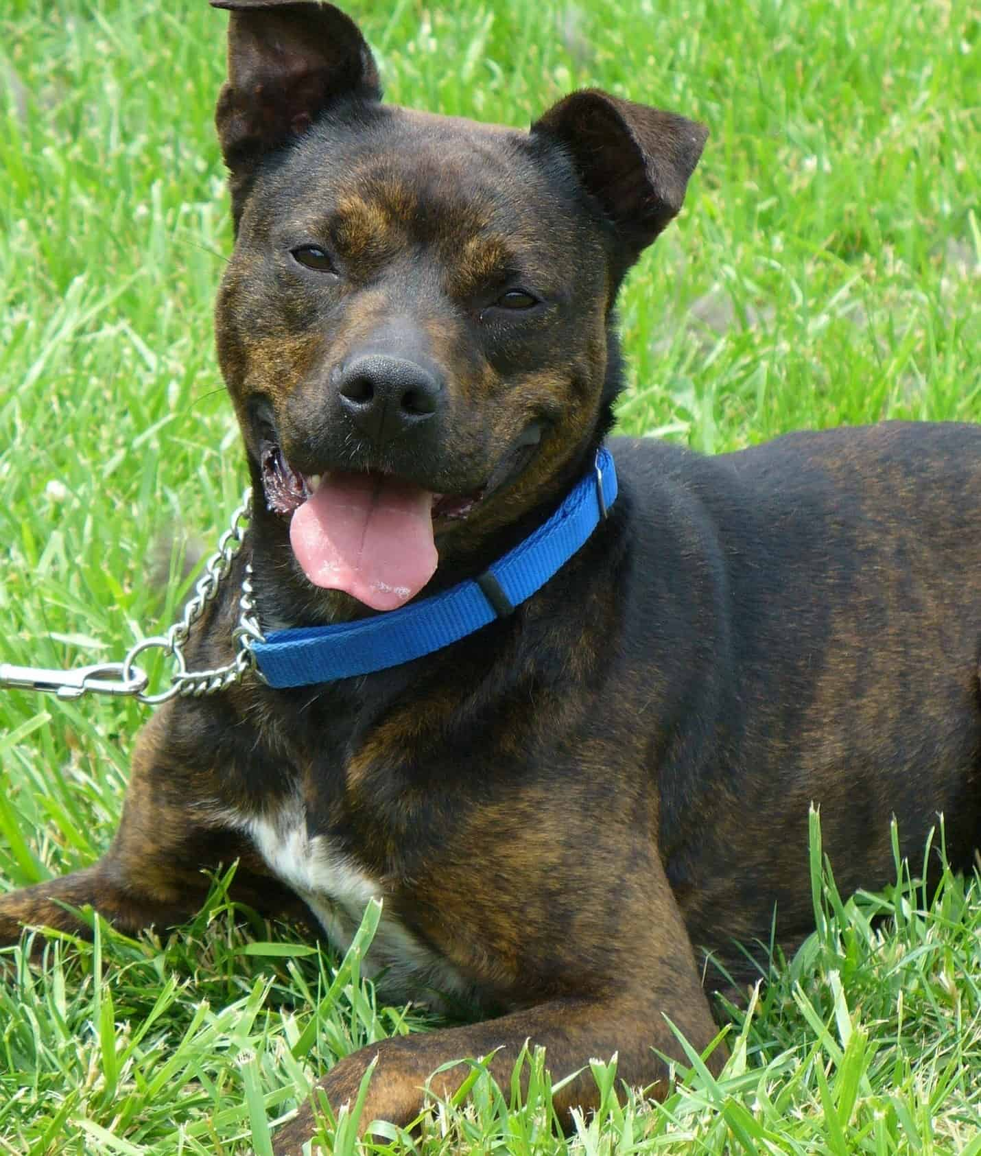 You are currently viewing Is there any way to prevent a Pit Bull/Rottweiler from getting aggressive?