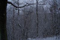 pohled na chrám sv. Barbory před kácením stromů, při sněhové vánici