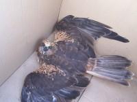 poraněný pták neměl ani sílu se bránit