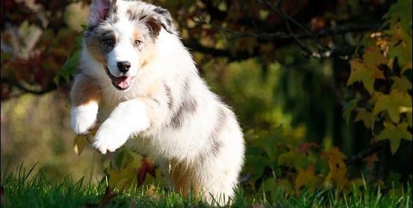 Hundetræning, Den Glade Hundeskole