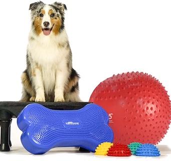 Hundefitness og gymnastik
