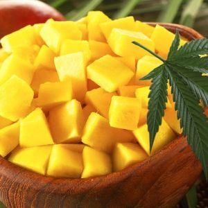 Hvorfor mango og cannabis er en match i himmelen