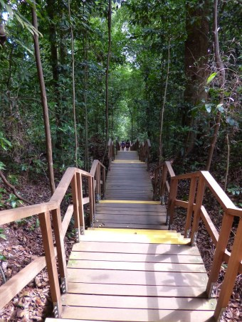 Eternal 888 on MacRitchie Tee Top Walk 10