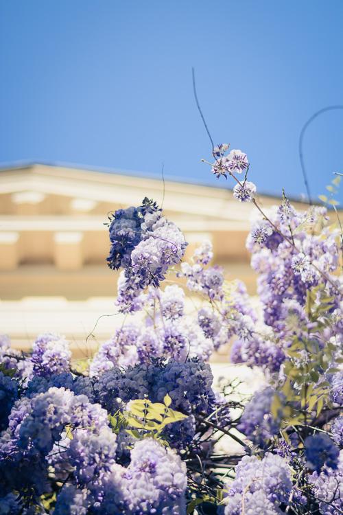 Lilac Blue Sky Denina Martin