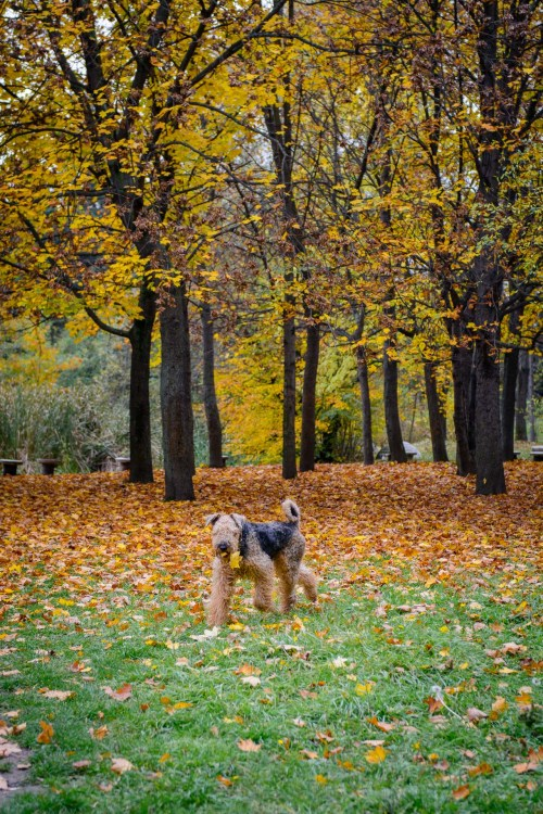Autumn colors running dog