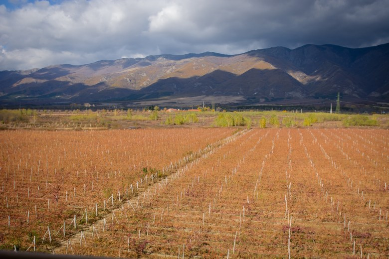 Chateau Copsa fields of wineyeards