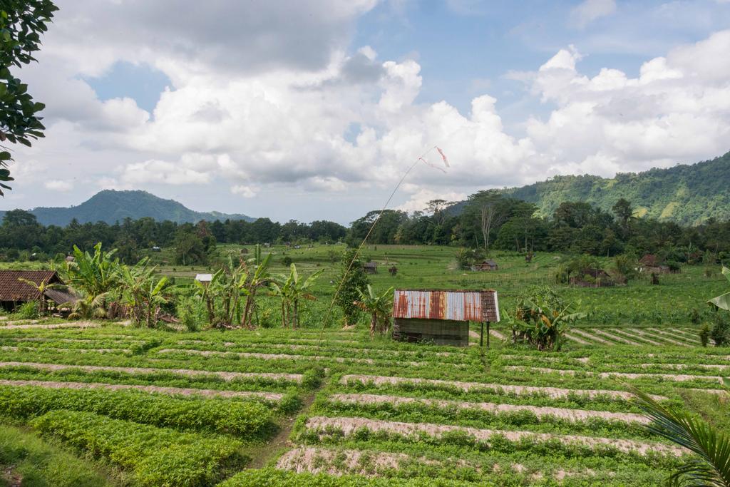 Het typische groene landschap van Bali - veel landbouw.