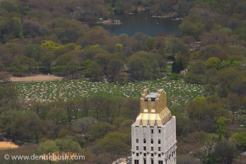 'Central Park - Strawberry Fields' © Denise Bush