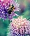 Bee Z