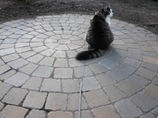 mon chat..