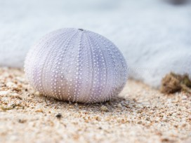 Paradise Bay nr Exmouth, Western Australia