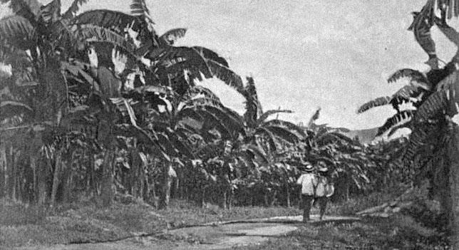 denkbrocken_bananenplantage_1894.jpg