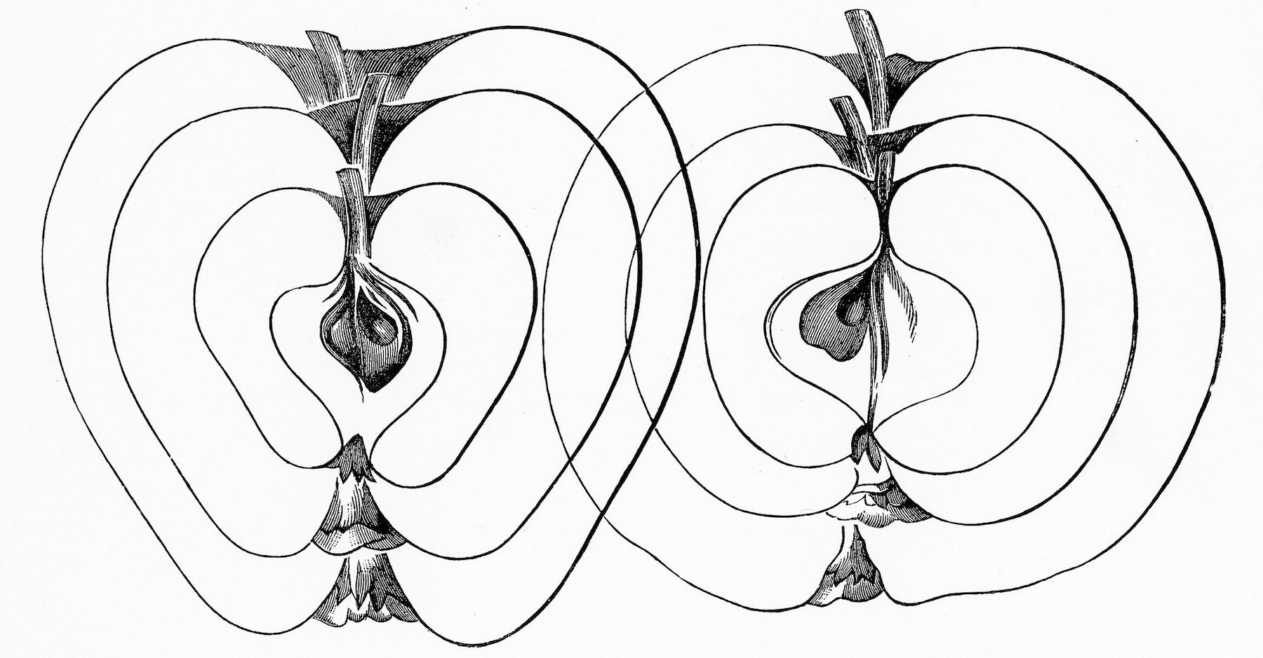 Bild: The fruit grower's guide : Vintage illustration of apples, shapes, sizeshttps://www.rawpixel.com/image/50953/free-illustration-image-apples-cc0-creative-commons URL: