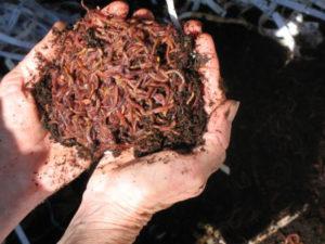 handen met wormen