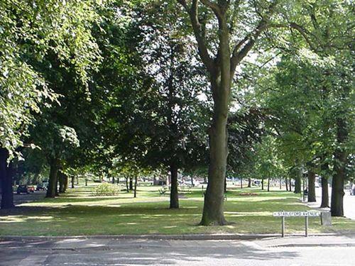 Monton Tree