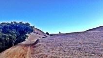 Lone deer watchin' me