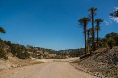 lonely-ripio-heading-up-through-the-monkey-trees
