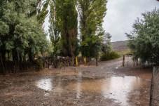 constant-rain