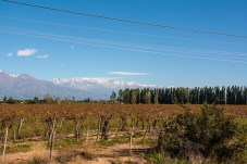vineyards-on-way-into-mendoza