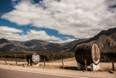 vineyards-near-cafayate