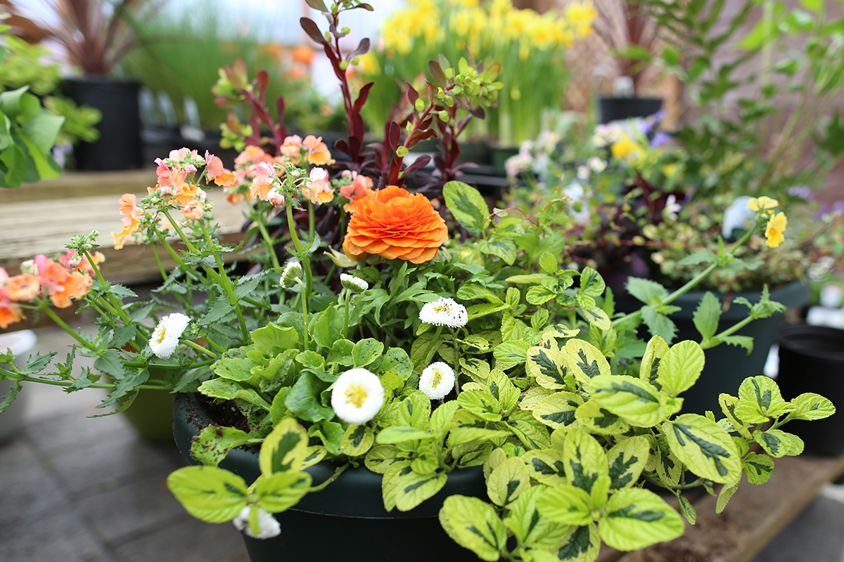 Spring Container Planting & Gardening