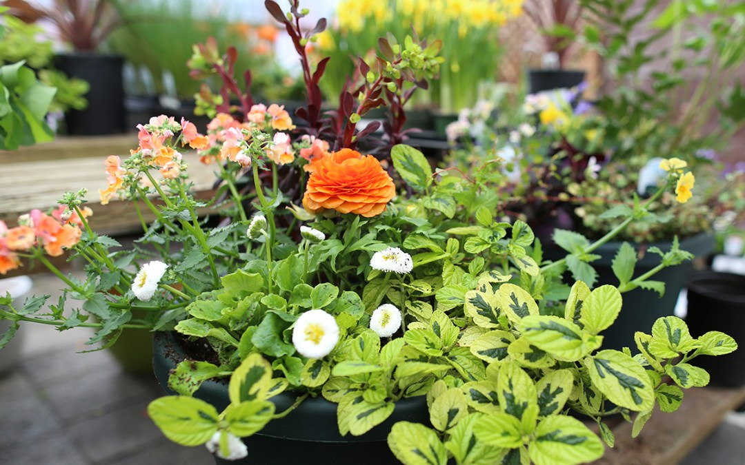 Spring Container Gardening