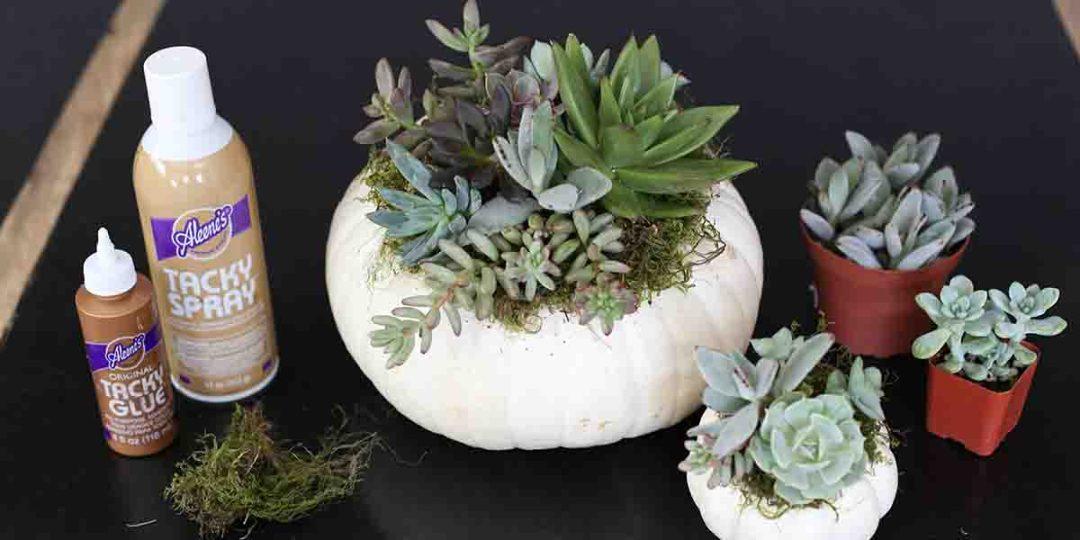 succulent pumpkin supplies