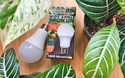 Become Enlightened With Indoor Grow Lights