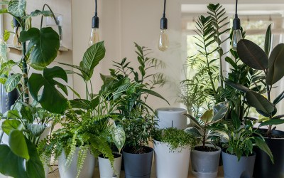 Emergency Care for Indoor Plants During a Winter Power Outage